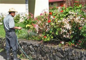 Услуги садовника - Уборка и подготовка территорий