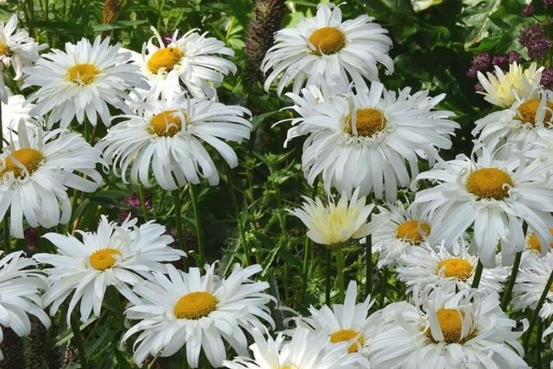 Я подарю тебе цветы кто поет