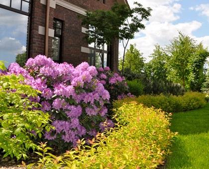 Ландшафтный дизайн: Посадка растений