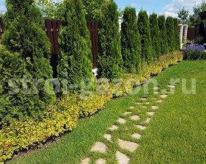 Озеленение участка - Живая изгородь из туи