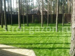 """Посевной газон - Студия ландшафтного дизайна """"Строй-Газон"""""""