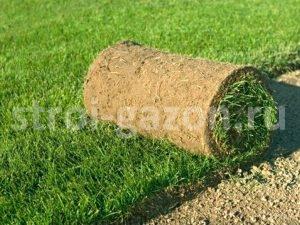 """Рулонный газон - Студия ландшафтного дизайна """"Строй-Газон"""""""