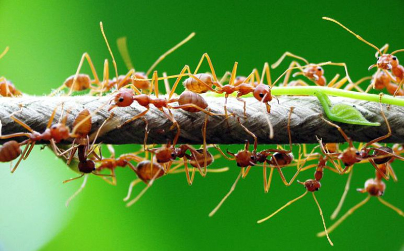 Как избавиться от муравьев? - подскажет Студия ландшафтного дизайна Строй-Газон