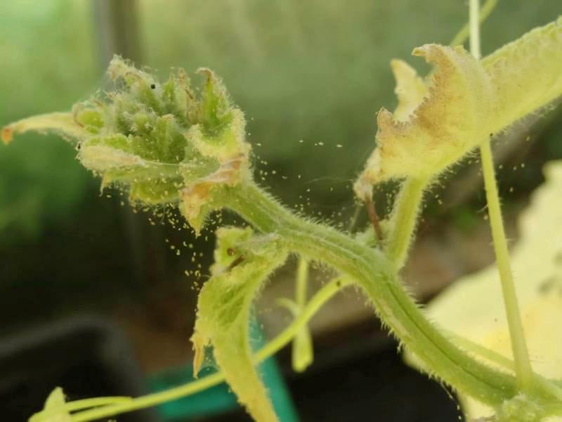 Как избавиться от паутинного клеща? - подскажет Студия ландшафтного дизайна Строй-Газон