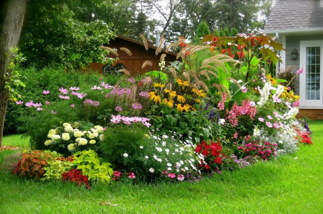 Вечно цветущая клумба — миксбордер