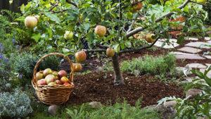 Посадка плодовых деревьев - Студия ландшафтного дизайна Строй-Газон