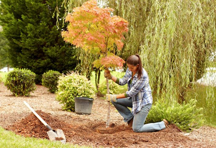 Посадка растений с гарантией - Посадка деревьев на участке