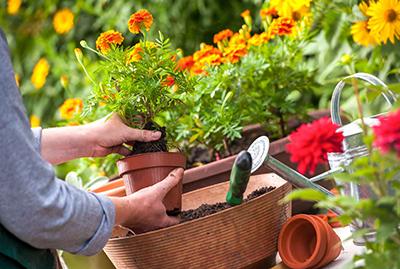 """Посадка растений с гарантией - студия ландшафтного дизайна """"Строй-Газон"""""""